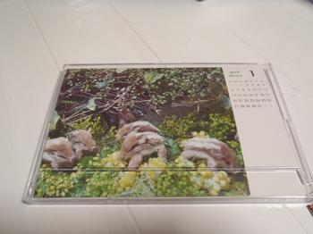 PC300005.JPG